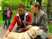 Смотреть онлайн бесплатно Честный пёс